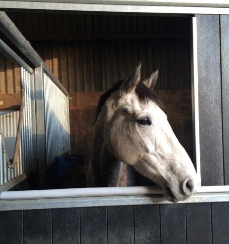 Gallery Farleigh Court Equestrian Centre